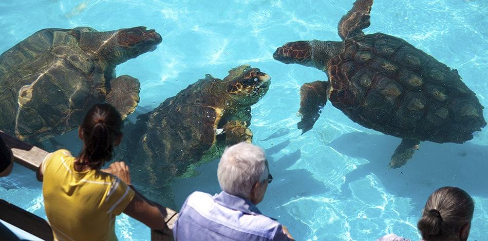 tartarugas do projeto tamar